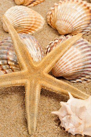 seastar: seashells and seastar on the sand Stock Photo