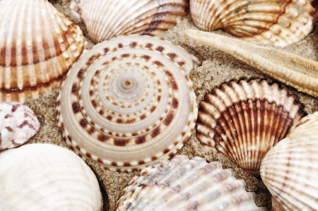 closeup of a pile of seashells on the sand Stock Photo - 9594205
