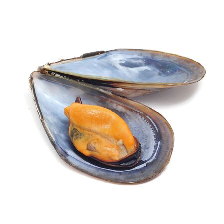 mollusc: a mussel in its shell on a white background