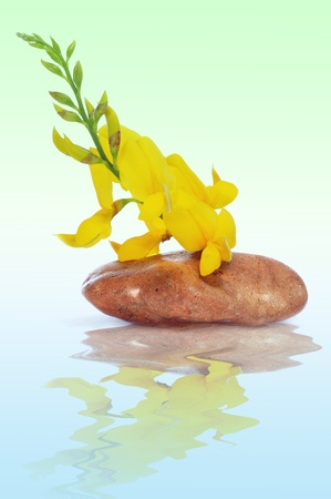 a stone with yellow flowers on a blue background Stock Photo - 9635261