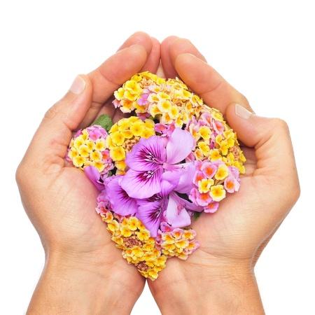 fiori di campo: qualcuno con le mani piene di fiori su sfondo bianco Archivio Fotografico