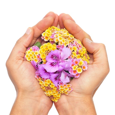 someone with the hands full of flowers on a white background Stock Photo - 9635263