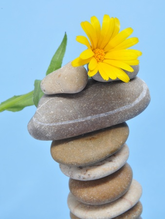 a pile of zen stones and a yellow daisy on a blue background photo