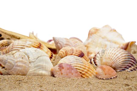 a pile of seashells on the sand on a white background photo
