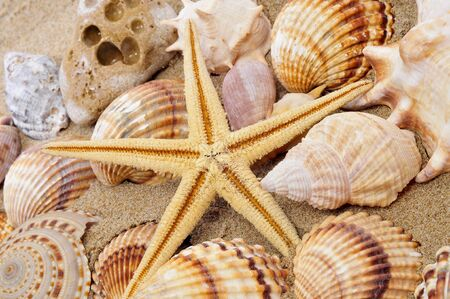 a seashell and a seastar on the sand photo