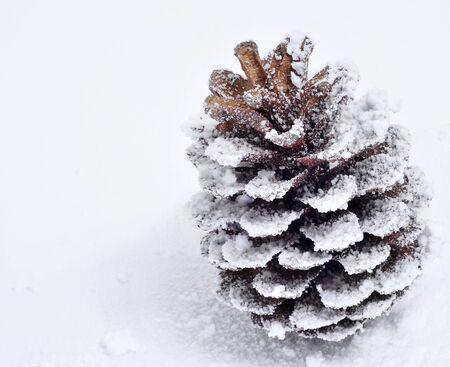 pomme de pin: Gros plan d'un c�ne de pin sur la neige Banque d'images