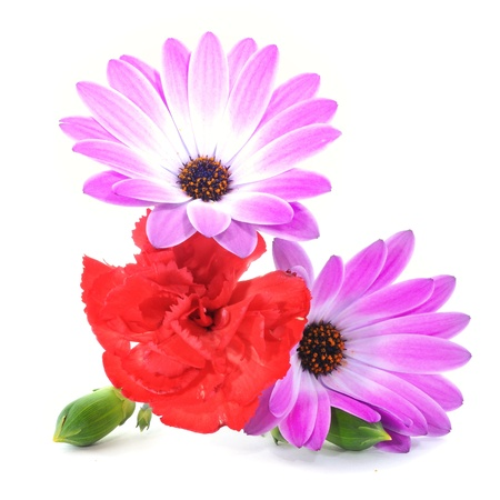 closeup of some purple daisies and a red carnation Reklamní fotografie