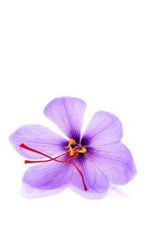 saffron: a saffron flower on a white background Stock Photo