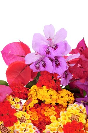 a bunch of different flowers, as verbenas, violets and bougainvillea, on a white background photo