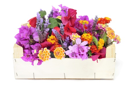 a crate with different flowers, as verbenas and bougainvillea, on a white background