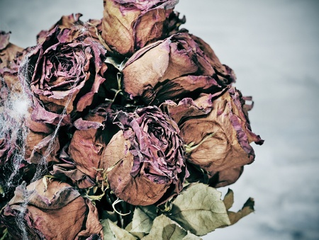 closeup of a dried roses bouquet with spider web photo