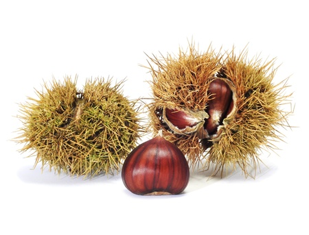 buckeye seed: some chestnuts in its shell on a white background