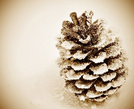 a pine cone on the snow with a vintage style photo