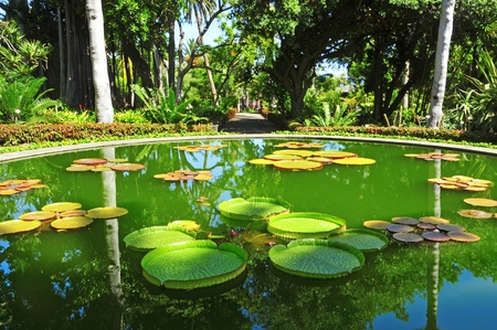 view of a pond with water lilies in a tropical park photo