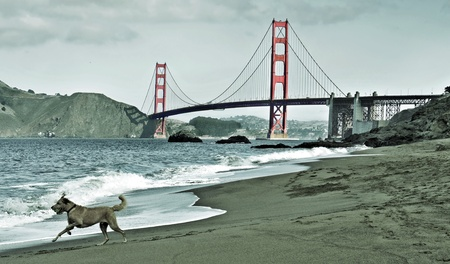 Picturesque view of Golden Gate Bridge from Baker Beach in San Francisco, United States photo
