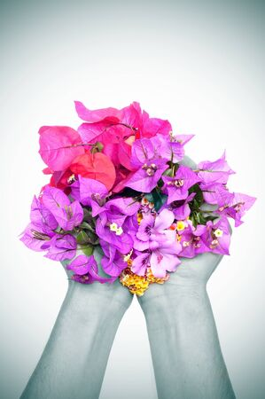 hands full of flowers, as verbenas, bougainvillea and violets photo