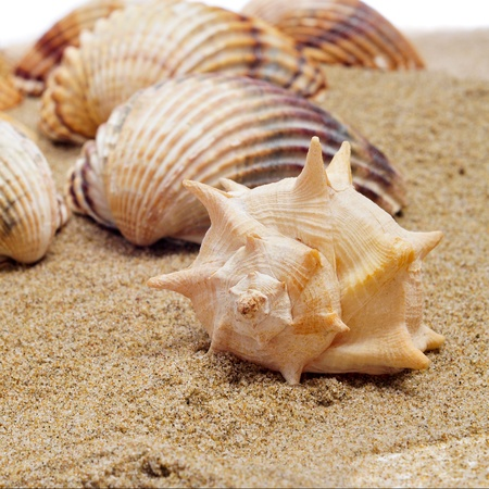a pile of seashells on the sand photo