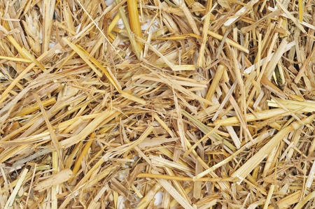 closeup of a pile of golden straw photo