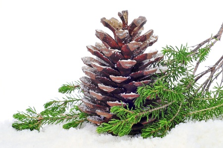 festive pine cones: closeup of a pine cone on the snow Stock Photo