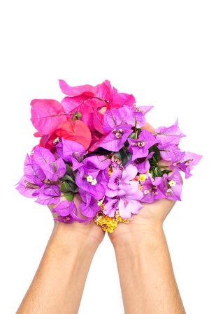 hands full of flowers, as verbenas, bougainvillea and violets on a white background photo