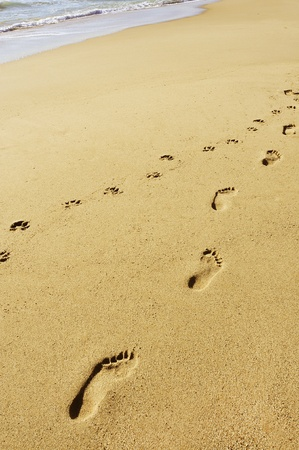 sandy brown: footprints in the sand of a beach