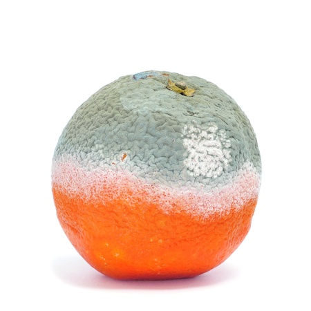 rotten fruit: a moldy orange on a white background