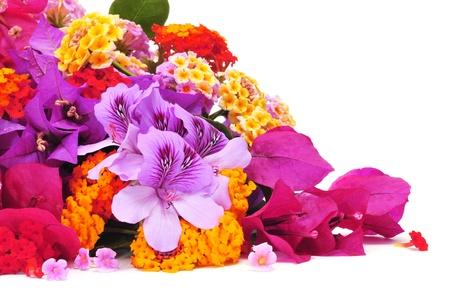 violeta: un ramo de flores diferentes, como verbenas y buganvillas, sobre un fondo blanco