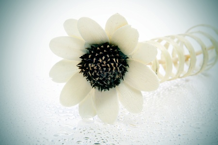 flower-shaped ornament with drops on a white background