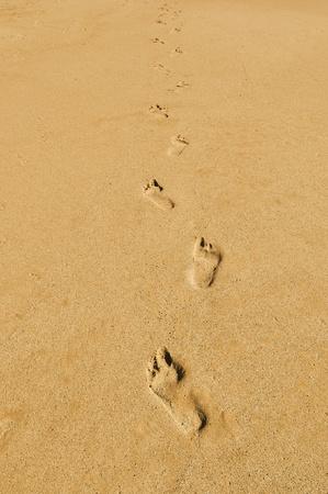 sand mold: footprints in the sand on a beach
