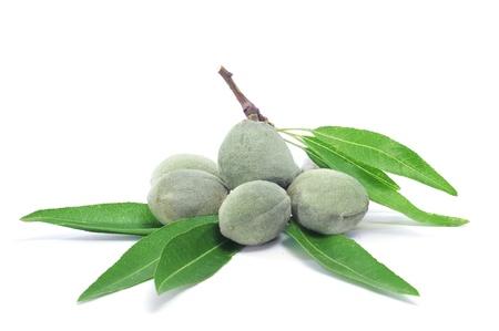 delle mandorle verdi con le sue conchiglie su uno sfondo bianco