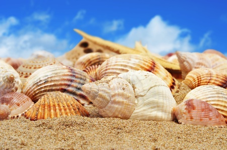 a pile of seashells on the sand of a beach Stock Photo - 12553897