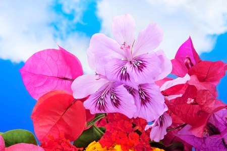 bougainvillea: a bunch of different flowers, as verbenas and bougainvillea, over the blue sky Stock Photo