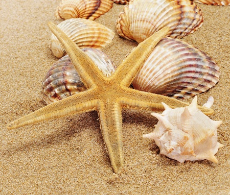 a pile of seashells and a starfish on the sand Stock Photo - 12553832
