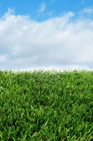 closeup of grass over the blue sky Stock Photo
