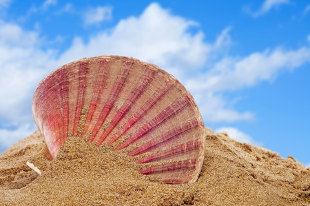 a seashell on the sand of a beach Stock Photo