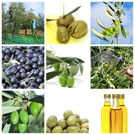 a collage of nine pictures of different scenes of olive harvesting and products photo