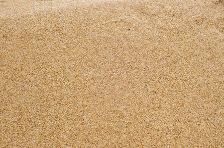 sand grains: closeup of sand