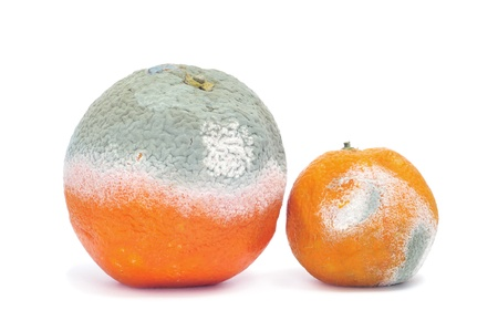 a moldy orange and a moldy mandarine on a white background photo