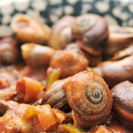 closeup of a dish of spanish cooked snails in sauce photo
