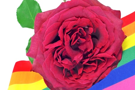 a red rose on a rainbow flag photo
