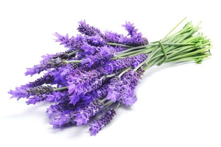 botanical medicine: a bunch of lavender flowers on a white background Stock Photo