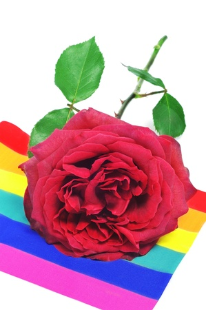 gay pride flag: closeup of a red rose on a rainbow flag Stock Photo