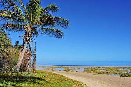 oasis in Sotavento Beach in Fuerteventura, Canary Islands, Spain Stock Photo - 14267843