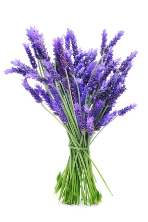 a bunch of lavender on a white background Stock Photo - 14309134