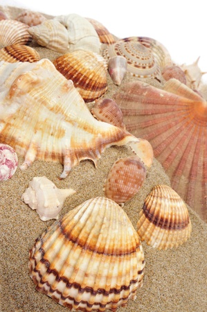 seashells with different shapes and colors on the sand