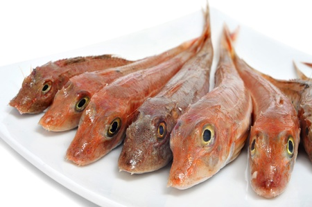 goby: closeup of a plate with raw fishes on a white background Stock Photo