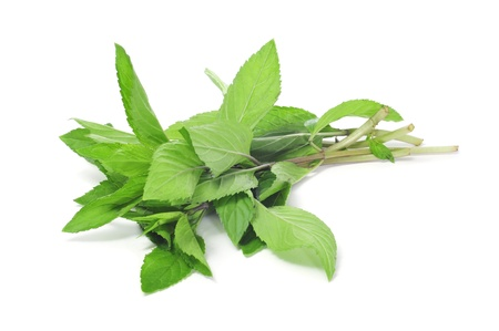 some mint sprigs on a white background Stock Photo - 14602588
