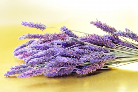 closeup of a bunch of lavender flowers photo