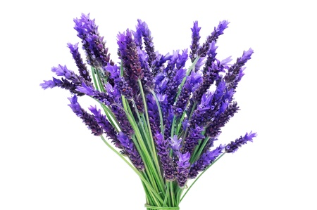 lavender flowers: a bunch of lavender flowers on a white background Stock Photo