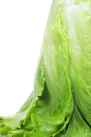romaine: closeup of a romaine lettuce on a white background